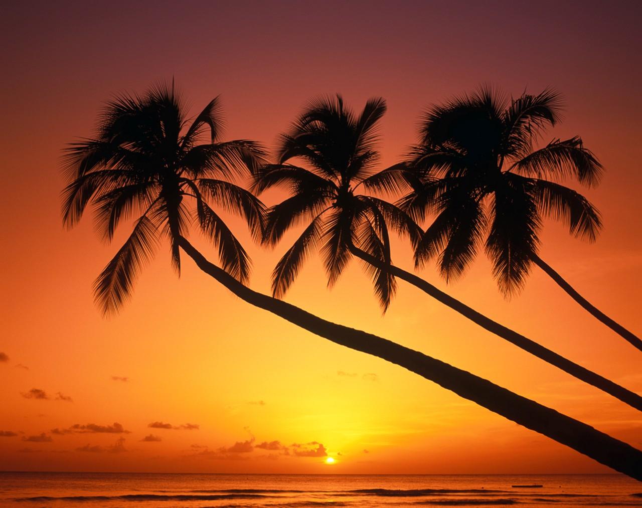 Barbados Events from WIMCO Villas