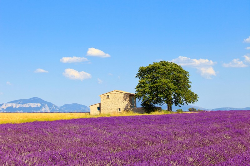 Provence, France Vacations from WIMCO Villas